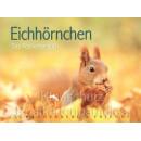 Postkartenbücher von Rannenberg | Eichhörnchen