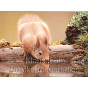 Postkartenbücher von Rannenberg | Eichhörnchen trinkt Wasser