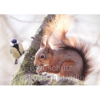 Postkartenbücher von Rannenberg | Eichhörnchen im Winter