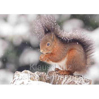 Postkartenbücher von Rannenberg | Eichhörnchen im Schnee