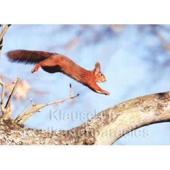 Postkartenbücher von Rannenberg | springendes Eichhörnchen