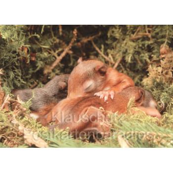 Postkartenbücher | Eichhörnchen