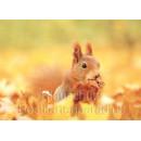 Postkartenbücher von Rannenberg | neugieriges Eichhörnchen