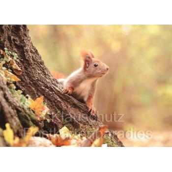 Postkartenbücher von Rannenberg | Eichhörnchen im Wald