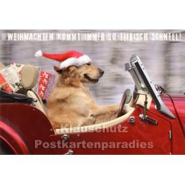 Weihnachten kommt immer so tierisch schnell | Doppelkarte Weihnachten