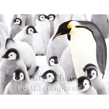 Pinguine - Das Postkartenbuch