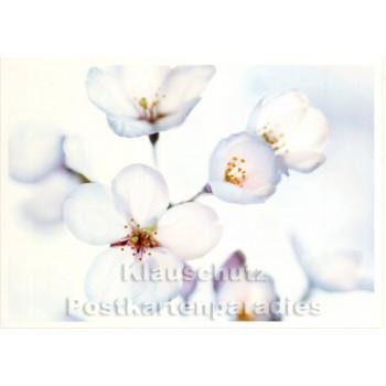 Japanische Kirschblüte - Blumenkarte
