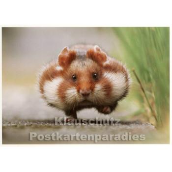 Rush Hour - Hamster Postkarte von SkoKo
