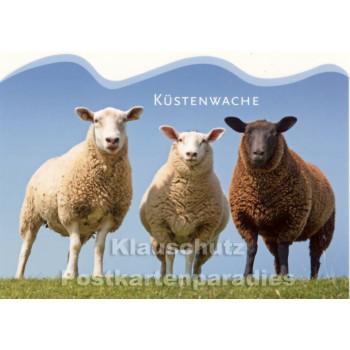 Küstenwache - Postkarte mit Schafen von SkoKo