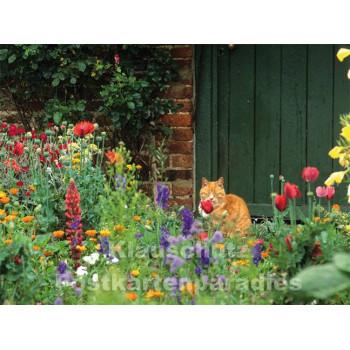 Postkartenbuch | Romantische Bauerngärten