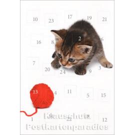 Kätzchen - Adventskalender Doppelkarte