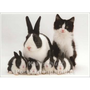 Fotokarte - Kaninchen und Katze