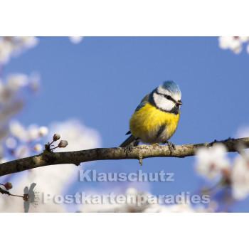 Blaumeise - Tier Foto Postkarte