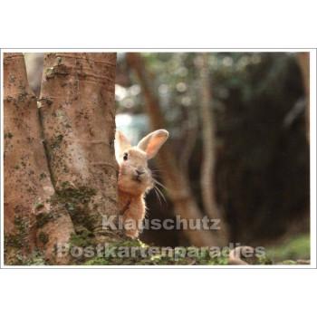 Postkarte Ostern | Wildkaninchen
