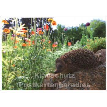Postkarte Igel in der Wildblumenwiese