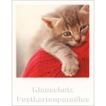 Polacard | Katzen Umarmung