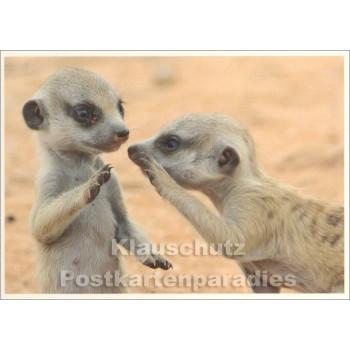 Postkarte | Junge Erdmännchen