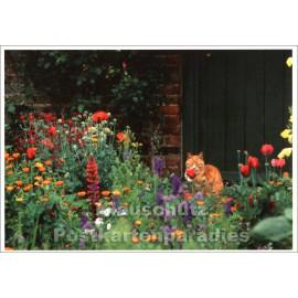 Postkarte | Traditioneller Bauerngarten mit Katze