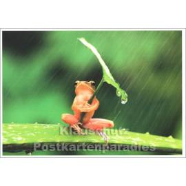 Wetterfrosch - Tier Postkarte von SkoKo