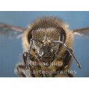Postkartenbuch | Bienen
