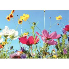 Sommerliche Blumenwiese | Postkarte