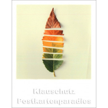 Polacard | Blatt Jahreszeiten