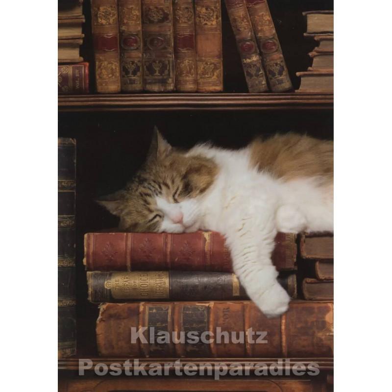 Postkarte | Katze im Bücherregal