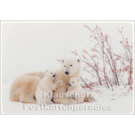 Weihnachtskarte Eisbären Familie