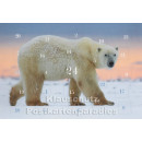 Adventskalender Postkarten - Eisbären