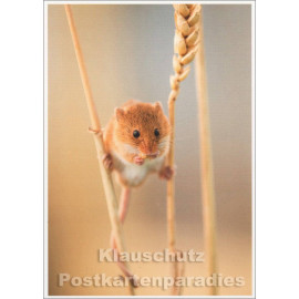 Tier Postkarte | Klettermax