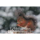 Adventskalender Doppelkarte - Eichhörnchen