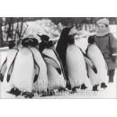 Kind mit Pinguinen   Fotokarte