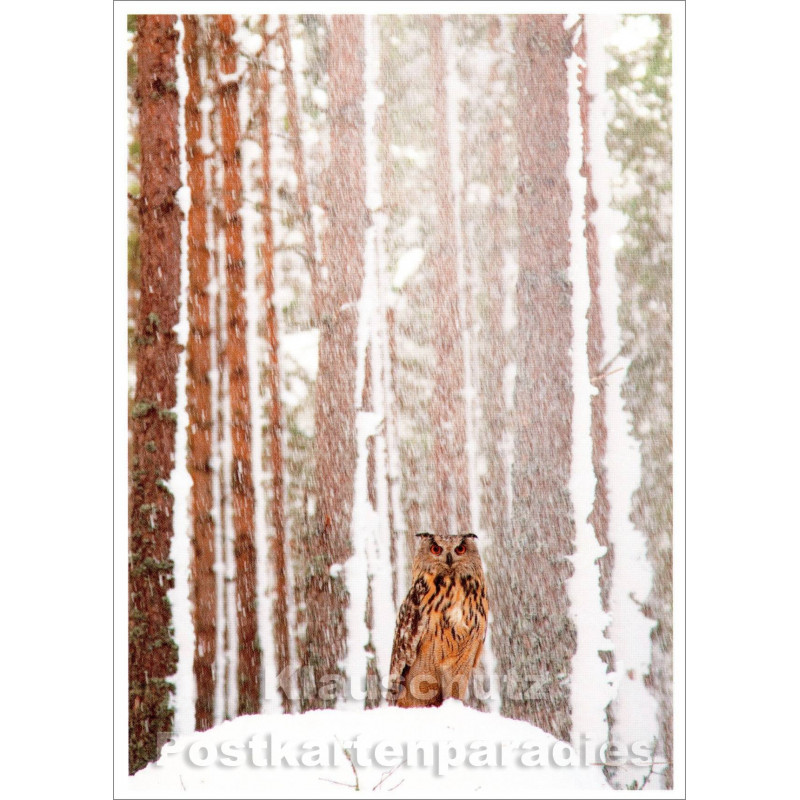 Winter Postkarte | Uhu / Eule
