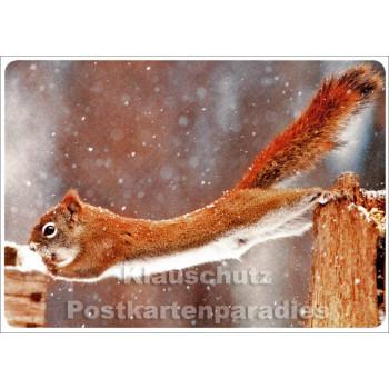 Weihnachtskarte Winter - Eichhörnchen