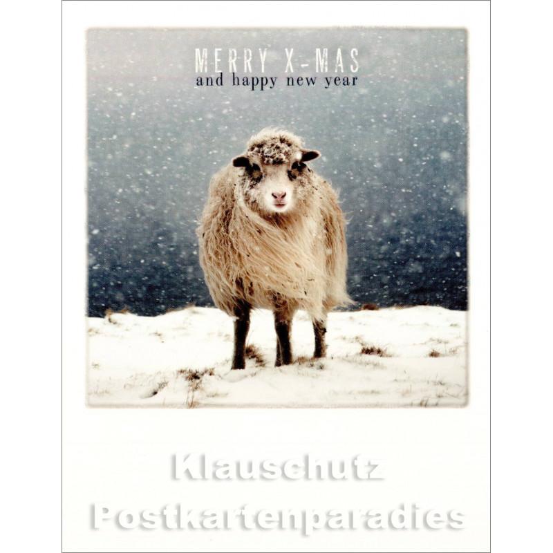Polacard Weihnachten | Weihnachtsschaf