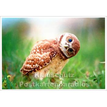 Neugierige Eule - Tier Postkarte
