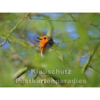 Postkartenbuch | Die Vogeluhr