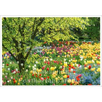 Postkarte | Tulpenbeet