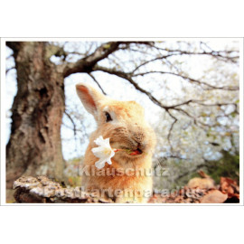 Postkarte | Wildkaninchen mit Kirschblüte