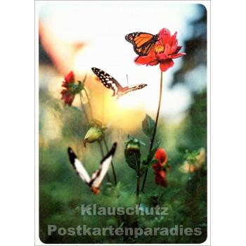 Frühlingserwachen - Blumen Postkarte
