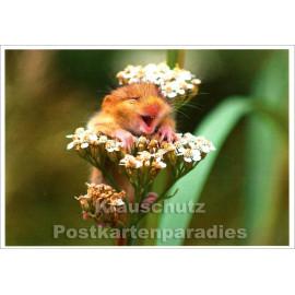Haselmaus - Tier Postkarte