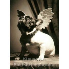 Foto Postkarte s/w | Hund mit Flügeln