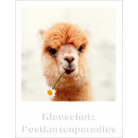 Polacard | Alpaca