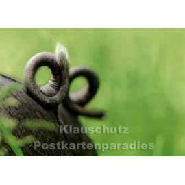 Schwein Ringelschwanz | Tier Postkarte