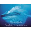 Postkartenbuch | Wale