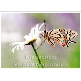 Sommer Postkarte mit Schwalbenschwanz auf Wiese
