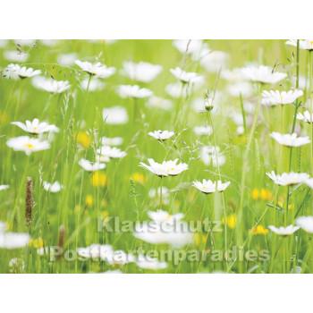 Postkartenbuch Sommergrüße