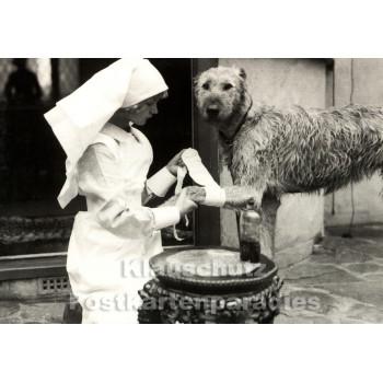 Foto Postkarte - Krankenschwester verarztet Hund