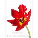 Blumen Postkarten Frühling Sparset - Motiv: Tulpe rot