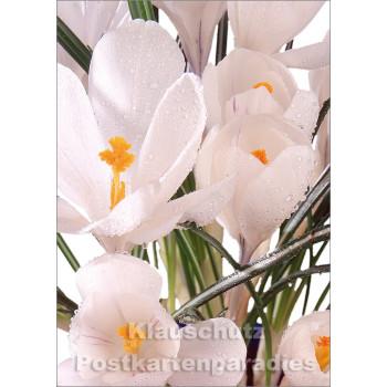 Blumen Postkarten Frühling Sparset - Motiv: Krokusse